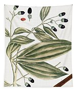 Malabar Cinnamon, 1735 Tapestry