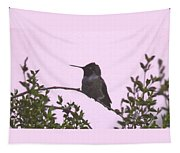 Male Costa's Hummingbird With Mauve Tapestry