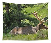 D10271-male Elk 2  Tapestry