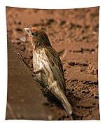 Male House Finch V10 Tapestry