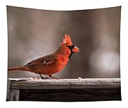 Male Northern Cardinal Winter New Jersey  Tapestry
