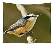 Male Red Breasted Nuthatch 2151 Tapestry
