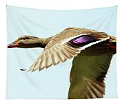 Mallard In Flight . 40d5450 Tapestry