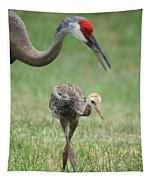 Mama And Juvenile Sandhill Crane Tapestry
