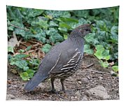Mama Quail Profile With Ivy Tapestry