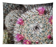 Mammillaria Cactus With Small Flowers Tapestry