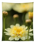 Marguerite Daisy Named Madeira Crested Primrose Tapestry