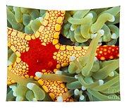 Marine Life, Close-up Tapestry