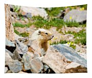 Marmot On Mount Massive Colorado Tapestry