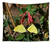 Matched Pair Of Sulfur Butterflies Tapestry