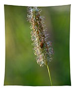 Meadow Foxtail Tapestry