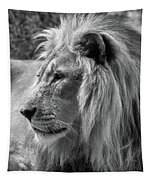 Meditative Lion In Black And White Tapestry