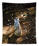 Meerkat     Say What Tapestry