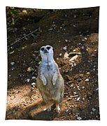 Meerkat Poising Tapestry