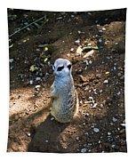 Meerkat Responding Tapestry