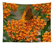 Milkweed And A Frittalary Tapestry