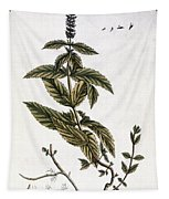 Mint Plant, 1735 Tapestry