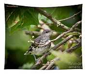 Mockingbird Youngster Tapestry