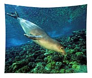Monk Seal Dive Tapestry