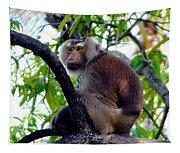 Monkey In Tree Tapestry