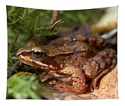 Moor Frog In September  Tapestry