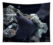Moray Eel Eating Little Fish Tapestry