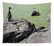 Mother And Her Ducklings Tapestry