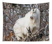 Mountain Goat Pride Tapestry