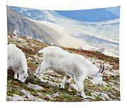Mountain Goats 1 Tapestry