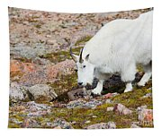 Mountain Goats On Mount Bierstadt In The Arapahoe National Fores Tapestry