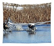 Mute Swan Chasing Canada Goose Tapestry