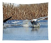 Mute Swan Chasing Canada Goose I Tapestry