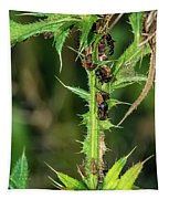 Mutualism - Ants And Treehoppers Tapestry