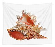 Natural Shell Collection On White Tapestry