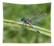 Nature Macro - Blue Dragonfly Tapestry