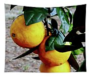Naval Oranges On The Tree Tapestry
