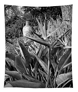Nepenthe Bird Of Paradise B And W Tapestry