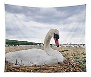 Nesting Mute Swan At Abbotsbury Tapestry