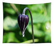 Nodding Clematis Tapestry