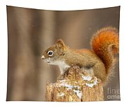 North American Red Squirrel In Winter Tapestry