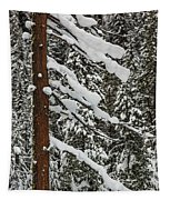 North Cascades Forest Tapestry