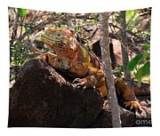 North Seymour Island Iguana In The Galapagos Islands Tapestry
