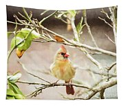Northern Cardinal Female - Digital Painting Tapestry