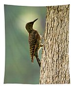 Northern Flicker Halo Tapestry