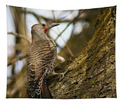 Northern Flicker Woodpecker 1 Tapestry