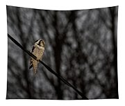 Northern Hawk-owl 22 Tapestry