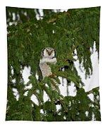 Northern Hawk-owl 24 Tapestry