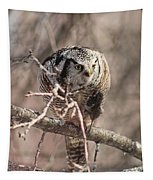 Northern Hawk Owl Having Lunch 9450 Tapestry