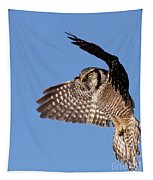 Northern Hawk Owl Tapestry