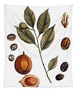 Nutmeg, 1735 Tapestry